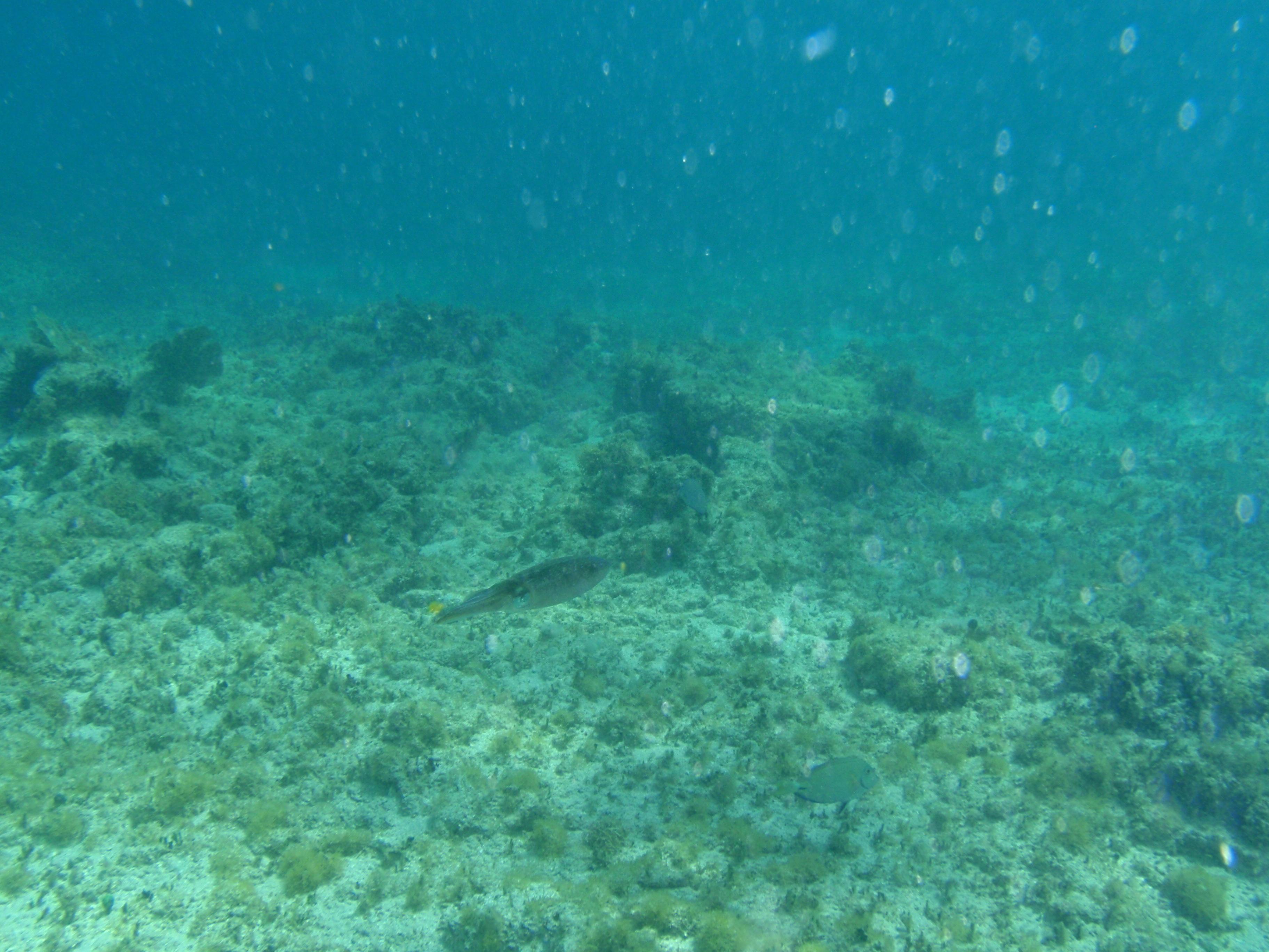 Underwater Ocean Rocks St  maarten  underwaterUnderwater Ocean Rocks